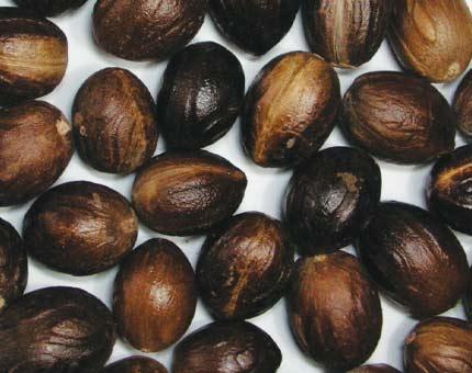 Nutmeg Oil | buy Online